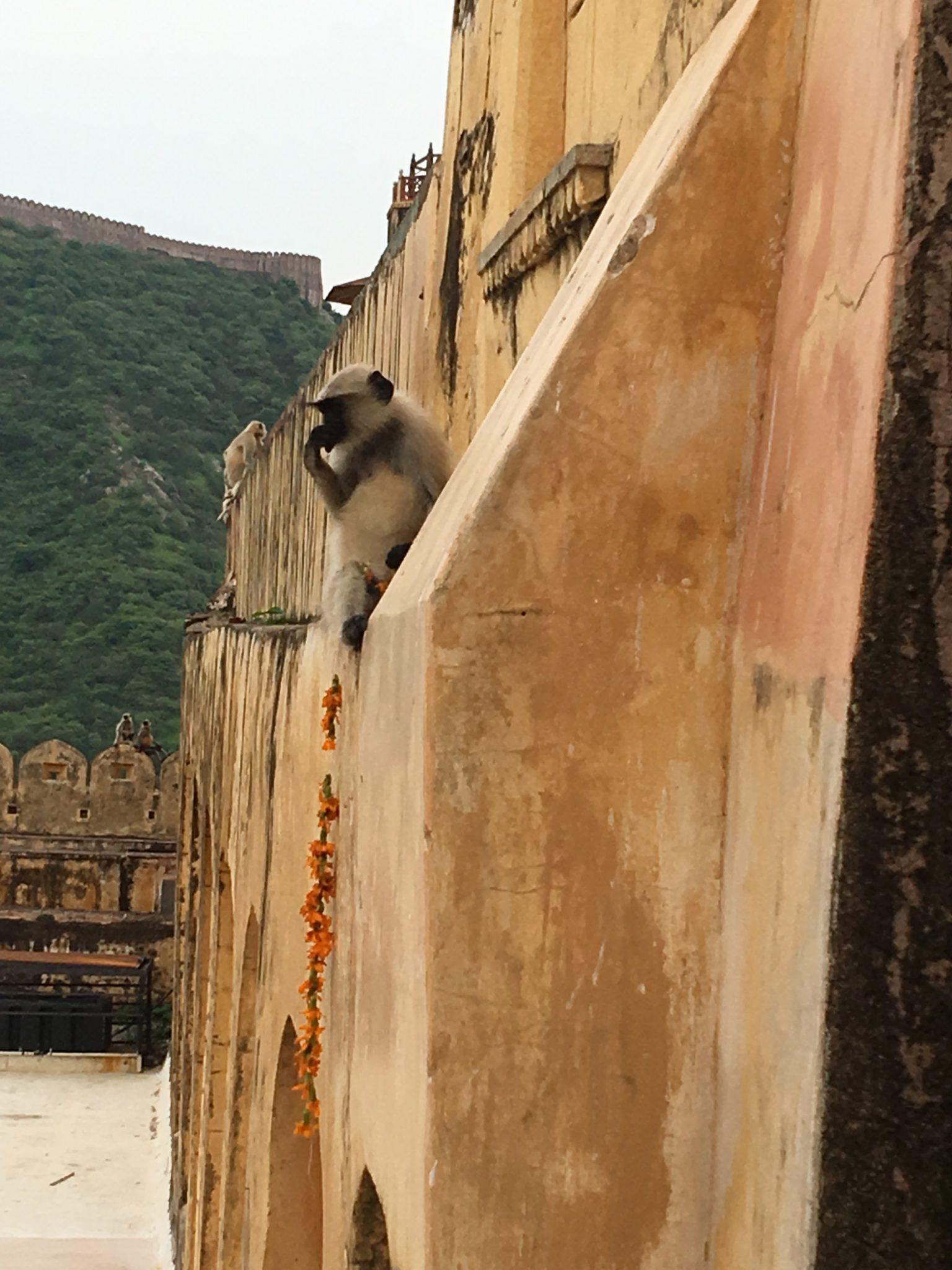 Hier tun sich die Affen an den Opfergaben gütlich:).