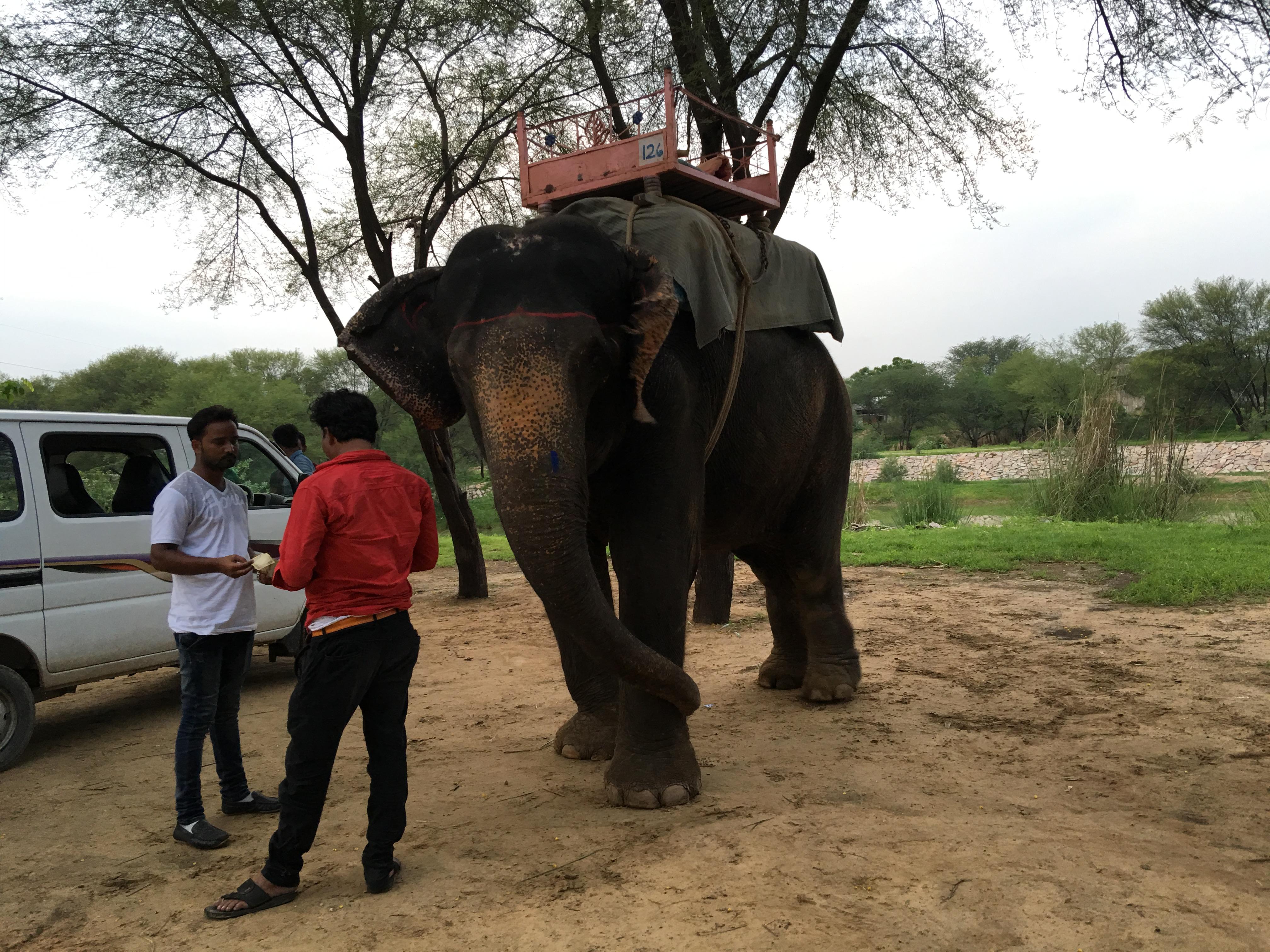 """Unser Elefant"""
