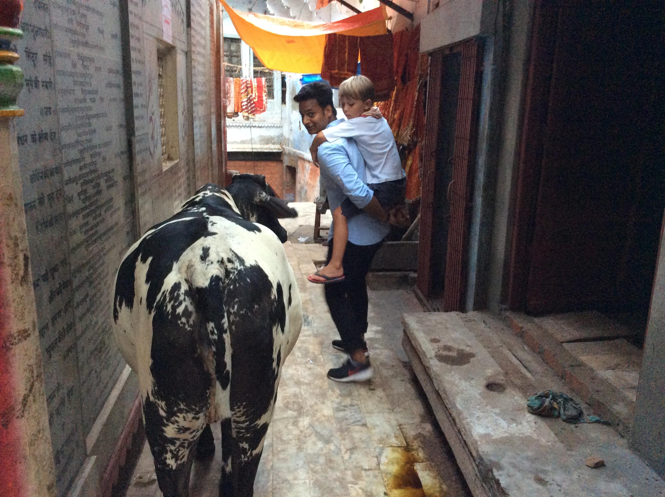 Kühe haben immer Vortritt:)....