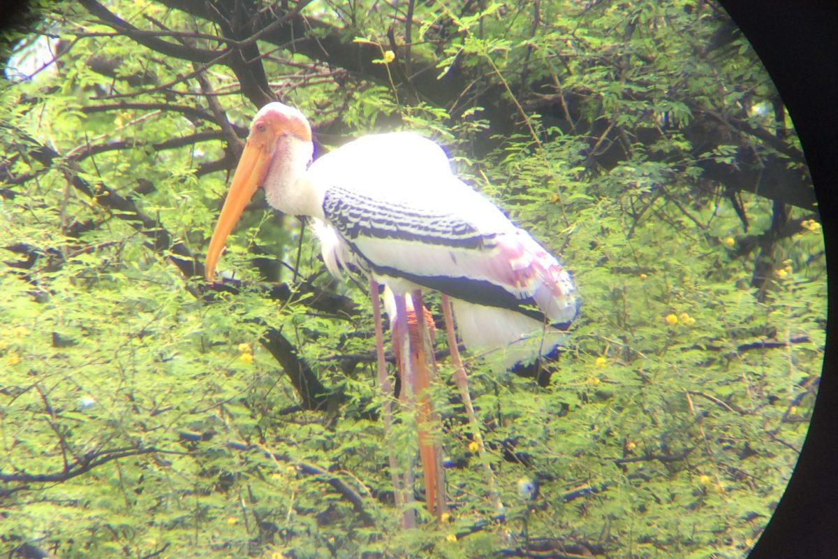Hunderte von diesen riesigen Buntstörchen- wie eine Mischung aus Flamingo und Storch- und